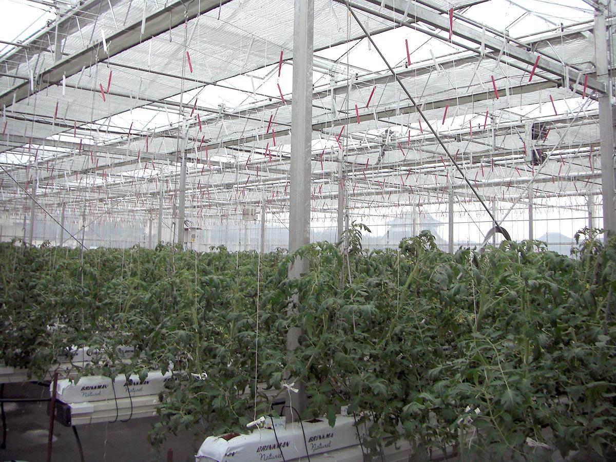 新規温室建設工事 - 吉田農材 - 施工事例